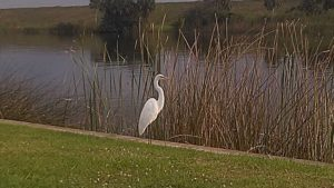 Birdwatching at Gracious Park on Lake Okeechobee