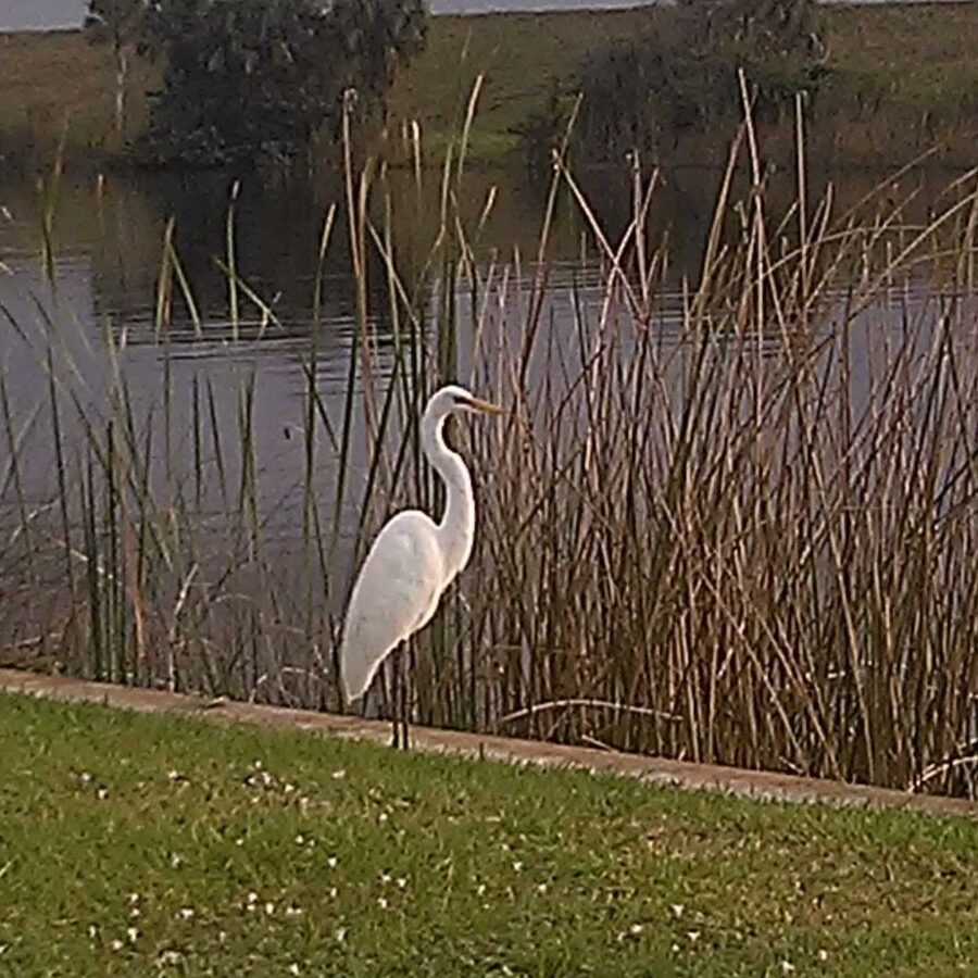 Nature and Birdwatching at Gracious Park on Lake Okeechobee